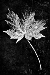 Leaf black and white von leddermann