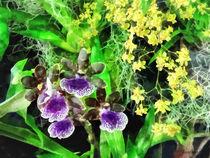 Sig2-geyserjamieandgoldenfantasy-orchids