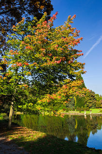 Thorp Perrow Autumn by Colin Metcalf