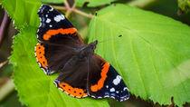 Butterfly von Ralf Warnecke