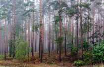 Nebelwald von georgfotoart