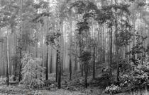 Nebelwald - sw von georgfotoart