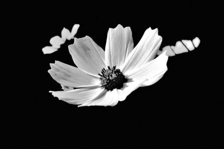 Blumenwiese-2015-10-008i-6000sw
