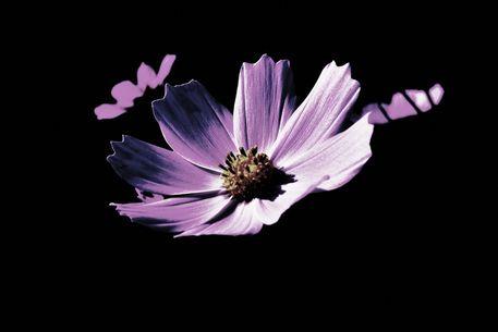 Blumenwiese-2015-10-009-6000d