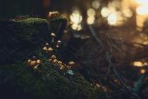 kleine Welten III von Florian Kunde