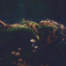 Kleine Welten II von Florian Kunde
