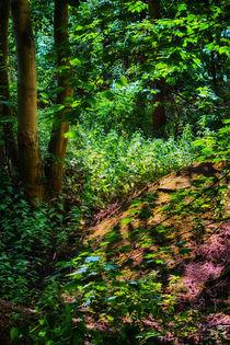Forest Shadows von Vicki Field