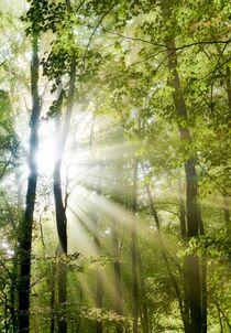 Wald der Träume von Bernhard Kaiser
