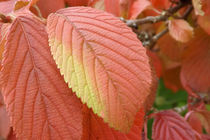 Blatt im Herbst by lorenzo-fp