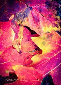 Autumn leaves  von Mary Lee Parker