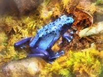 Fa-bluepoisondartfrog