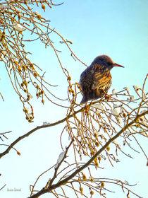 Sparrow on a Winter Branch by Susan Savad