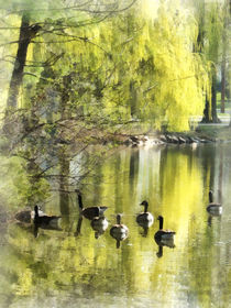 Geese by Willow by Susan Savad