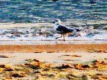 Seagull on Virginia Beach at Dawn von Susan Savad