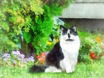 Black and White Cat by Flowers von Susan Savad