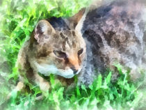 Tabby Cat Closeup von Susan Savad