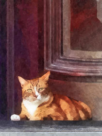 Orange Tabby Cat in Doorway by Susan Savad