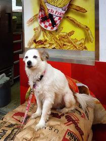Dog at Carnival von Susan Savad