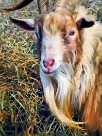 Billy Goat Closeup by Susan Savad