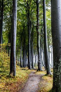Küstenwald von Angelika Bentin