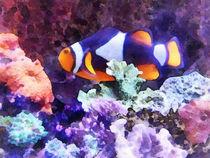 Clownfish and Coral von Susan Savad