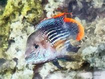 Fish - Rainbowfish von Susan Savad