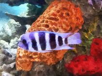 Striped Tropical Fish Frontosa von Susan Savad