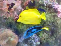Yellow and Blue Tang Fish von Susan Savad
