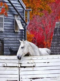 Sig-autumnfarmwithwhitehorse