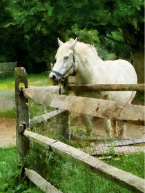 White Horse in Paddock by Susan Savad
