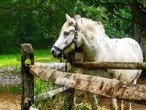 Gft-whitehorselookingaway