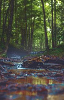 kleiner Bach im Wald von Florian Kunde