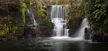 Penllergare Nature Reserve von Leighton Collins