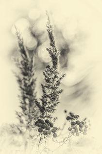 Pflanzen by Sandro Mischuda