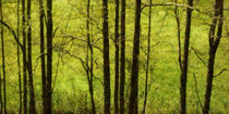 Blick ins Grüne by darlya