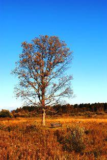 Lonely Autumn Tree, 2016