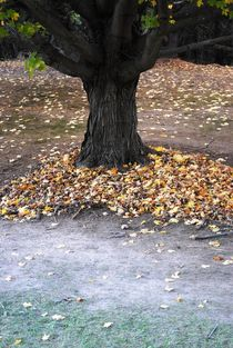 Leaves Under a Tree 2, 2015 by Caitlin McGee
