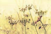 Wildflower Dreams by Vicki Field