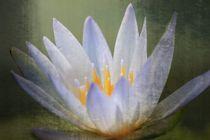 Lotus mit Textur by Bernhard Kaiser