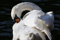The Peaceful Swan von David Pyatt