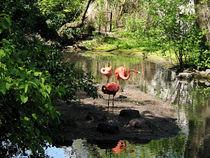 Three Flamingos by Susan Savad