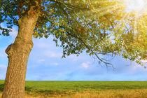 Baum im Sonnenlicht von darlya