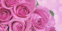 Rosenblüten von darlya