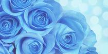 Blaue Rosen von darlya