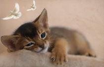 Dsc-9064-dot-t-abi-kitten2-10-15