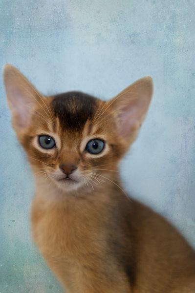 Dsc-8999-dot-abi-kitten1-10-15
