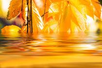 Herbststimmung von fraenks
