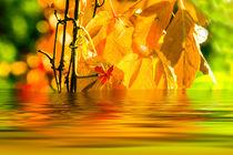 Herbststimmung 4 von fraenks