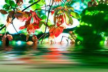 Herbststimmung 3 von fraenks