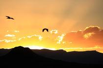 Sonnenuntergang und Vögel über den Drakensbergen in Südafrika by mellieha